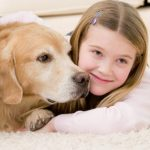pet odour removal treatment