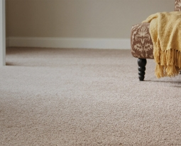 How Often Should You Clean Your Carpet?
